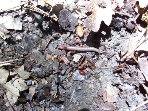 earthworm2_resized