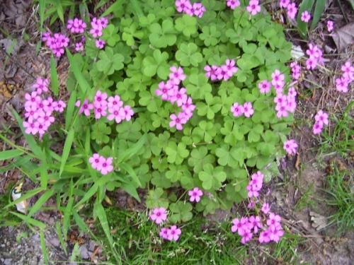 Flowers In My Yard
