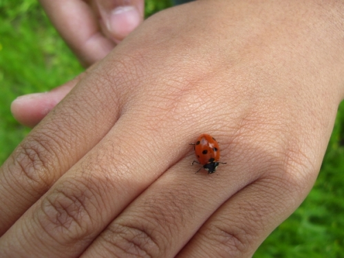 lady-bug_resized