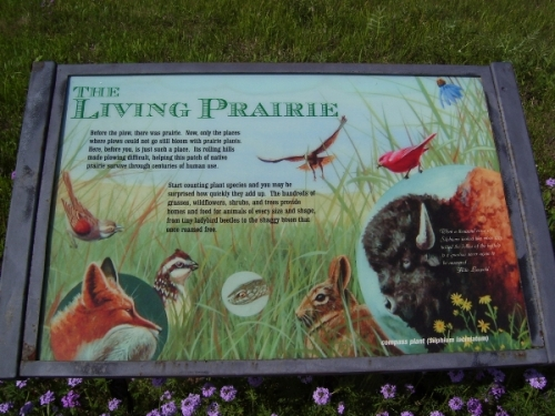 living-prairie-poster_resized
