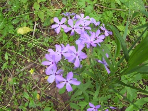 wildflowers_2_resized