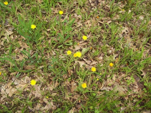 wildflowers_resized